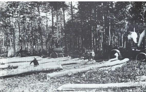 Kaalslag in Buggenhoutbos: mannen uit de ruime omgeving worden ingezet om bomen te rooien voor houtskool, geweerkolven en loopgraven.