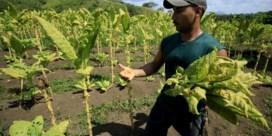 Broederlijk Delen: 'België moet vrijhandelsakkoord met Colombia afkeuren'