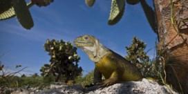 Galapagos-stichting op randje van failliet