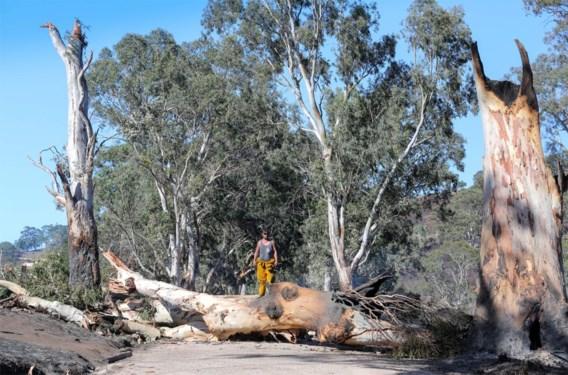 Twaalf woningen vernield bij bosbrand nabij Adelaide