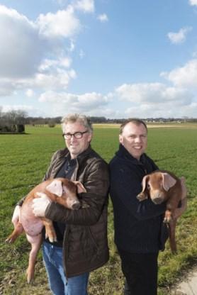 Filip Van Laere en Bart Mouton, kwekers van het Durocvarken.