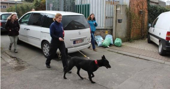De politie met de honden op weg naar de school. Daar controleerden ze tachtig leerlingen uit twaalf klassen.