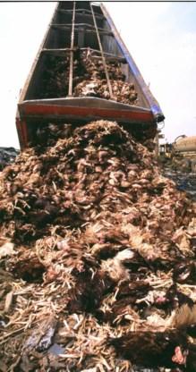 Een opruimactie tijdens de dioxinecrisis.