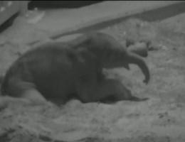 Mama-olifant laat Q nog niet drinken