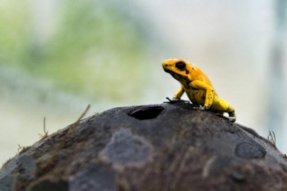 Een op zes soorten bedreigd door klimaatverandering