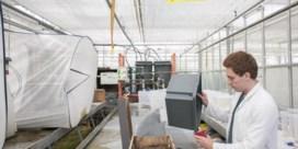 Insecten:de nieuwe soja voor de kippen