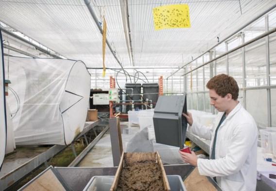 Onderzoekers van Thomas More en de KU leuven doen testen met insecten als diervoeding.