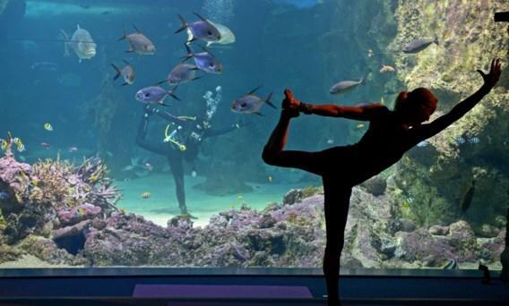 Inspanning vergt ontspanning: tips voor de ideale pauze