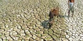'De droom van een Indiase boer is herboren te worden als een Europese koe'