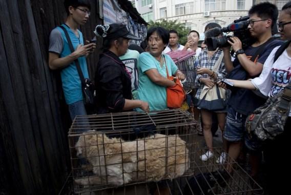 """<p>Dierenliefhebber Yang Xiaoyun redde honderd honden door ze te kopen op de markt. Zij had er ongeveer 1.000 euro voor over.<span class=""""credit"""">afp</span></p>"""