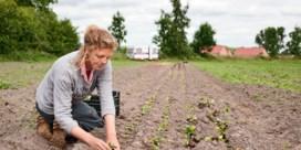'Als ik aan het planten of oogsten ben, heb ik het gevoel dat ik meer lééf'