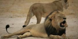 Mocht de tandarts Cecil de leeuw neerknallen?