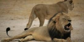 Zimbabwe wil uitlevering moordenaar Cecil de leeuw