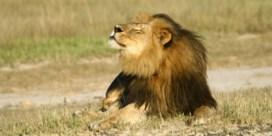 'Broer leeuw Cecil lijkt gezond en wel'