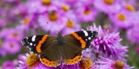 Zes soorten bloemen, dubbel zoveel vlinders