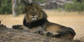 Luchtvaartmaatschappijen vervoeren geen jachttrofeeën meer na dood Cecil