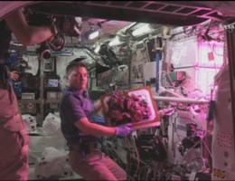 ISS-astronauten oogsten 'ruimtesla'