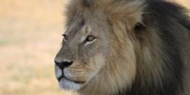 Leeuw uit park Cecil doodt gids