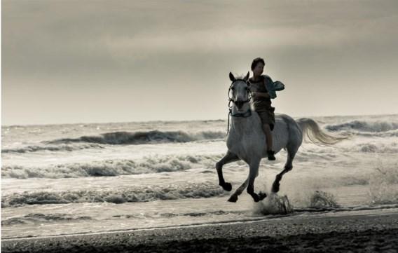 Straatkinderen op paarden: Vandekeybus weet hoe je met beelden de verbeelding kunt aanvuren.