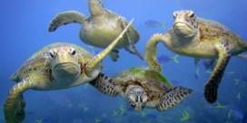 'Leven in zee is gehalveerd'
