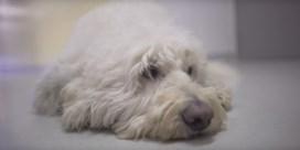 Robbie Williams eert zijn dode hond met knuffelvideo