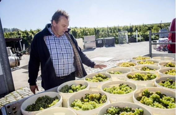 Ghislain Houben overschouwt zijn oogst van de dag.