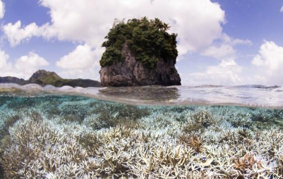 Oceanen staan voor grootste koraalsterfte ooit