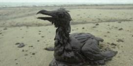 Defensie houdt twintigtal militairen klaar om stranden schoon te maken