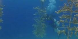Redt een 12-jarige de koraalriffen?
