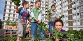Alles gaat beter dankzij de tuin (zelfs toetsen op school)