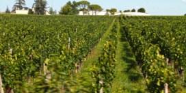 In Bordeaux profiteren de wijnboeren nog van hitte