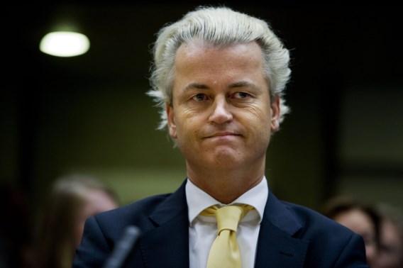 Wilders zoekt medewerker 'met afkeer van islam', Vlaamse student solliciteert