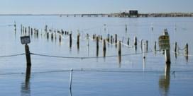 Zout en warmte teisteren de Delta van de Ebro