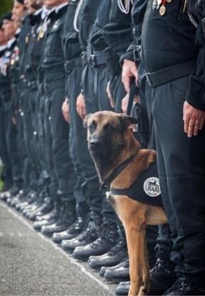 Politiehond Diesel krijgt hoogste Britse onderscheiding voor dieren