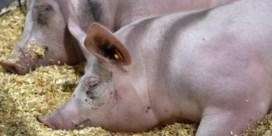 Warenhuizen gaan varkensboeren extra betalen