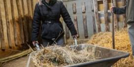 Hasseltse is meter jonge neushoorn Planckendael