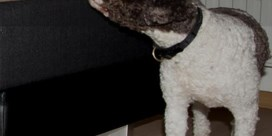 De hond die bedwantsen opspeurt