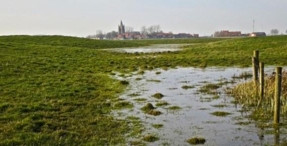 Poldergraslanden tussen Brugge en Oostende.