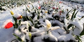 'Typisch voor een voorjaar'
