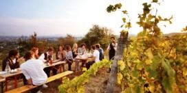 Wijn in Wenen, de grootste wijnbouwstad ter wereld