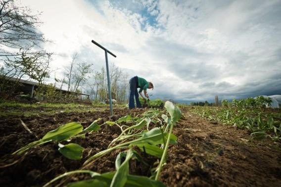 Waarde Belgische landbouwgrond stijgt door klimaatopwarming