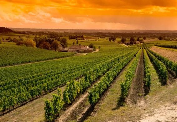 Geens bezat ook 21 wijndomeinen in de Bordelais.