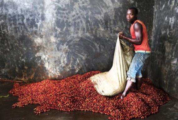 De keuze voor koffie is niet toevallig. 600.000 Burundese families leven van de koffieteelt.