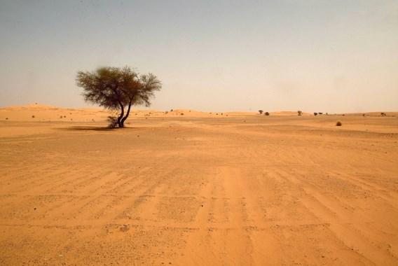 Lichamen van 34 migranten gevonden in woestijn