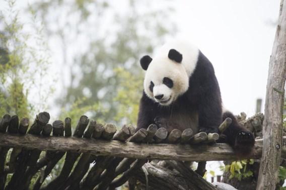 Komt er een TGV-halte speciaal voor de panda's?
