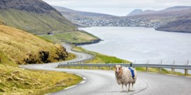 Geen Street View? Dan maar Sheep View