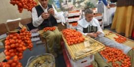 Dit wordt de eerste 'vegetarische stad' van Italië