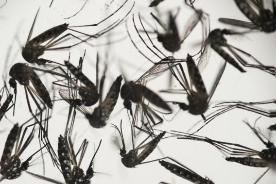 Wetenschappers ontdekken efficiënte antilichamen tegen zikavirus
