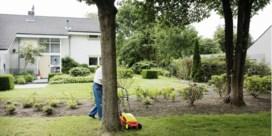Oude bomen verplant je niet