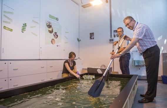 Belgisch centrum gaat eiwittekort in Congo oplossen met... alg